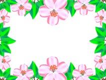 Czereśniowy okwitnięcie między zielonymi liśćmi ilustracja wektor