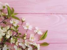 Czereśniowy okwitnięcie na różowej drewnianej piękno dekoraci koloru granicy projekta pastelu ramy retro tle fotografia stock