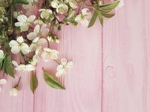 Czereśniowy okwitnięcie na różowym drewnianym pastel ramy tle fotografia royalty free