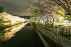 Czereśniowy okwitnięcie przy nocą, Kyoto nocą Zdjęcie Royalty Free