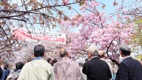 Czereśniowy okwitnięcie przy Osaka mennicy biurem Zdjęcie Royalty Free
