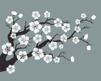 Czereśniowy okwitnięcie, Sakura kwiaty ilustracja wektor