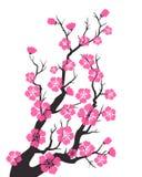 Czereśniowy okwitnięcie, Sakura kwiaty ilustracji