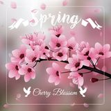Czereśniowy okwitnięcie, Sakura kwiaty rozgałęzia się na zamazanym tle royalty ilustracja