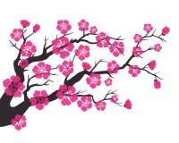 Czereśniowy okwitnięcie, Sakura kwitnie na białym tle ilustracji