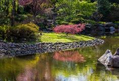 Czereśniowy okwitnięcie w japończyka ogródzie w Wrocławskim zdjęcie royalty free
