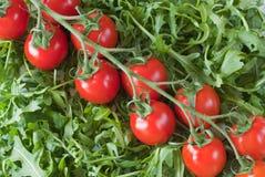 czereśniowy rucola sałatki pomidor Fotografia Royalty Free