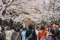 Czereśniowych okwitnięć festiwal w Chidorigafuchi parku, Tokio, Japonia Zdjęcia Stock
