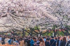 Czereśniowych okwitnięć festiwal w Ueno parku, Tokio, Japonia Fotografia Stock