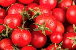 Czereśniowych pomidorów zbliżenie Obraz Stock