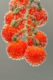 czere?niowej czerwieni dojrzali pomidory obraz stock