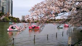 Czere?niowi drzewa w Ueno parku obraz royalty free