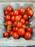 Czereśniowi pomidory fotografia royalty free