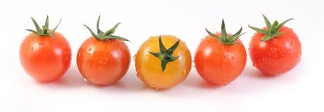 Czereśniowi pomidory Fotografia Stock