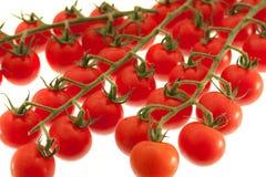 Czereśniowi pomidory na winogradzie Fotografia Royalty Free