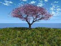 czereśniowy denny drzewo Zdjęcia Royalty Free