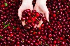 czereśniowe ręki Zdjęcie Royalty Free