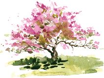 Czereśniowego okwitnięcia drzewo Zdjęcia Royalty Free