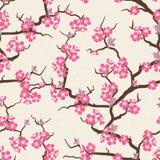 Czereśniowego okwitnięcia kwiatów bezszwowy wzór Zdjęcia Stock