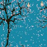 Czereśniowego okwitnięcia Sakura bezszwowy wzór Obraz Stock