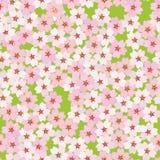 Czereśniowy okwitnięcie Sakura kwiaty bezszwowy wzoru Zdjęcie Stock