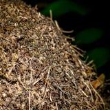 Czerep anthill w drewnach w lecie Zdjęcie Stock