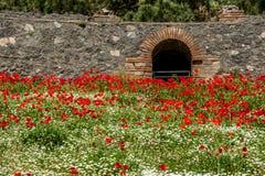 Czerep arena, Włochy Obraz Royalty Free