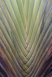 Czerep drzewka palmowe Zdjęcia Royalty Free