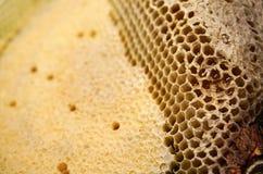 Czerep honeycomb z pełnymi komórkami Niedawno ciągnący miodowy pszczoły honeycomb beeswax Zdjęcie Stock