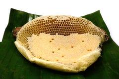 Czerep honeycomb z pełnymi komórkami Niedawno ciągnący miodowy pszczoły honeycomb beeswax Fotografia Stock
