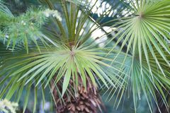 Czerep palmowi gąszcze w lecie, tło obraz royalty free