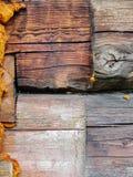 czerepu domowa stara szalunku ściana Obraz Royalty Free