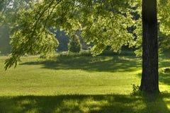 czernić cienia drzewa orzech włoski Fotografia Stock