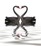 czernić romansowego łabędź Fotografia Royalty Free