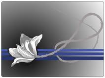 czerni róża Zdjęcie Stock