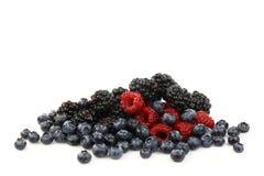czernic czarne jagody bunch malinki Obrazy Stock