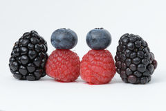 Czernicy, malinki i czarne jagody, Zdjęcie Royalty Free