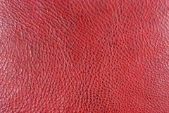 czerwień fotografia stock