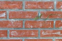 czerwień ceglasta mur tło Obrazy Royalty Free