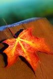 czerwień liści Zdjęcie Stock