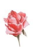 czerwień wzrastał Obraz Royalty Free