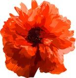 czerwień popy wektor Zdjęcia Royalty Free
