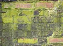 czerwieni ceglana spleśniała ściana Obrazy Stock