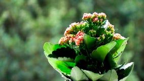 czerwieni i zieleni kwiat zbiory