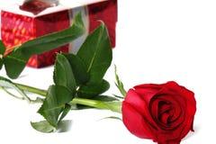 czerwieni róża Obrazy Royalty Free