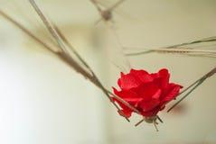 czerwieni róża od ucho banatka i papieru Fotografia Royalty Free