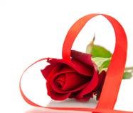 czerwieni róży biel obraz royalty free