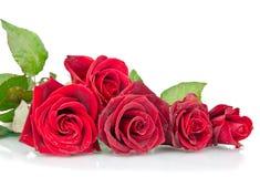 czerwieni róży biel zdjęcia royalty free