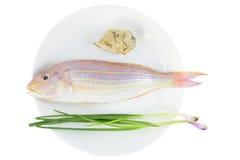 Czerwona świeża ryba Fotografia Stock