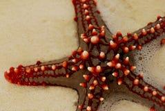 czerwona 3 denna gwiazda Zdjęcie Royalty Free